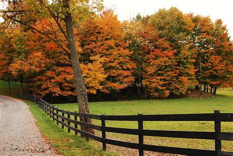 serenity cove beautiful fall foliage