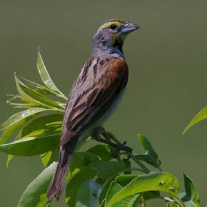 best 28 iowa birds identification can you name that