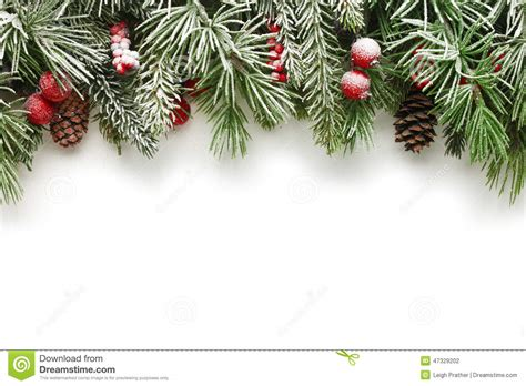 christmas tree branches background stock photo image