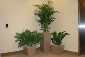 Ideas For Indoor Potted Plants Design Scottsdale Indoor Plant Landscaping Gallery The Potted Plant Interior Landscape Design
