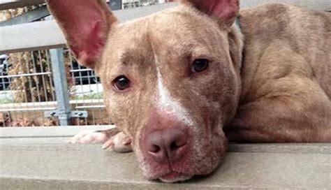 puppy adoption nj resolution establishes shelter pet month nj