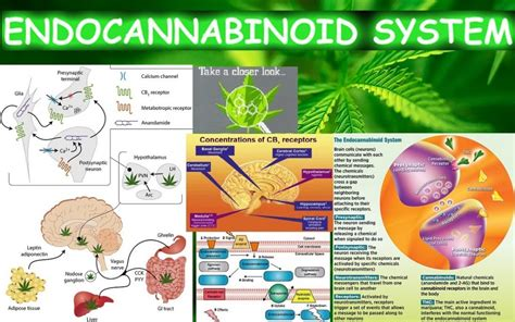 Fish Used To Detox Thc by Shall We Smoke Grass Or Take Fish Omega 3 And The