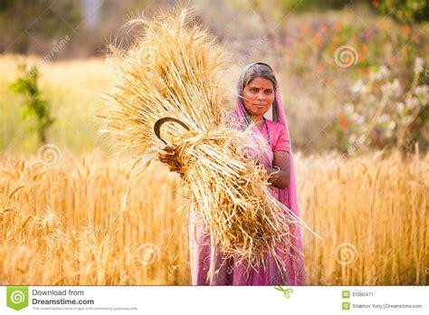 le bl en herbe b00idcfksy femme dans le bl 233 de r 233 colte d inde photo 233 ditorial image 31060471