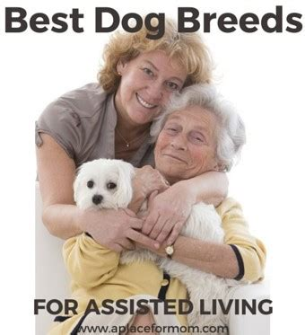 best small breeds for small breeds for the elderly pets wallpapers