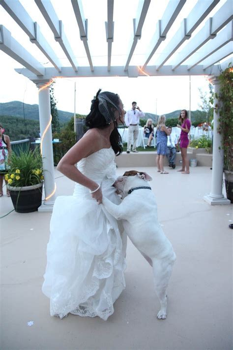 60 best images about Dog Dancing! on Pinterest   Share