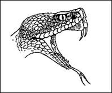 testo il cobra non è un serpente comune di ranco