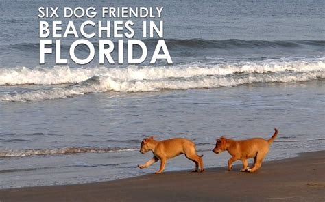 friendly florida beaches six friendly beaches in florida you must visit allivet pet care