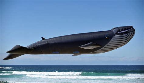 Boneka Ikan Nemu Uk S foto paus terbang dari australia absoluterevo s