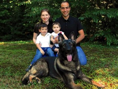 best protection dogs about us protection dogs