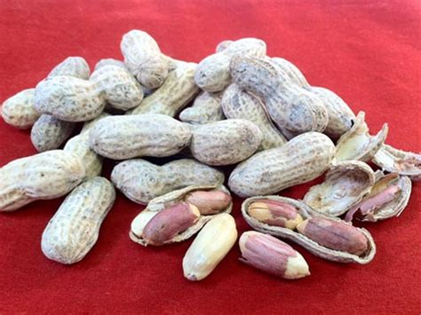 how do they get the salt inside roasted in shell peanuts