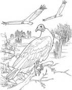 king vulture coloring page vultures coloring pages free coloring pages