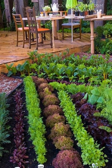 Herb And Vegetable Garden Ideas Vegetable Herb Garden Next To Deck Gardens Garden Ideas