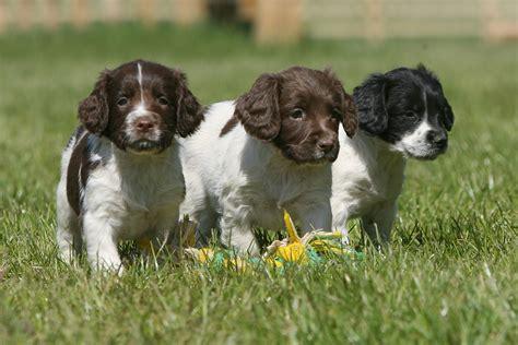 Animal Career Profile: Dog Breeder