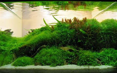 timo w 252 nsche and aquascaping aqua rebell