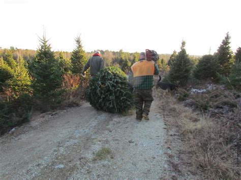 top 28 forestry christmas trees bctga open day at