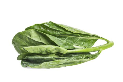 vegetables kale kale vegetable isolated on white background photo