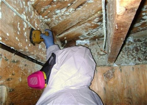 home improvement mold removal services by plumbing companies