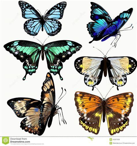 imagenes de mariposas realistas collection color 233 e de papillons r 233 alistes de vecteur