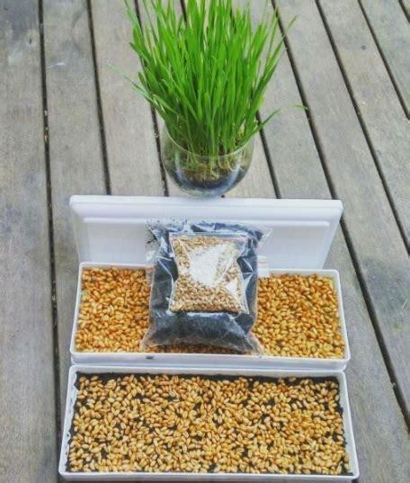 Harga Tray Semai 2017 jual tray semai hidroponik mini microgreens rumput