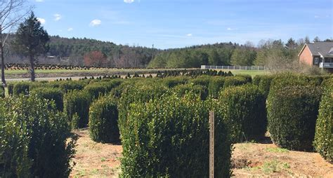 tree farms western nc nc tree nursery thenurseries