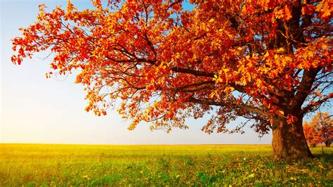 autumn landscape wallpaper 177893 8k wallpaper fall landscape tapety pinterest