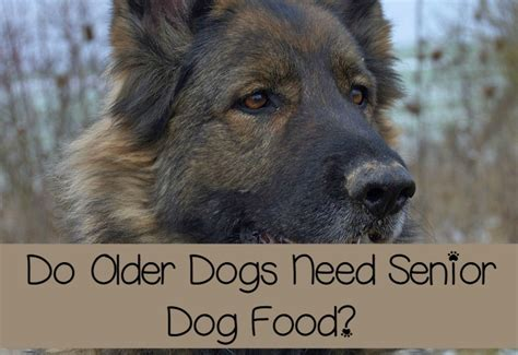 do puppies need puppy food do dogs need senior food