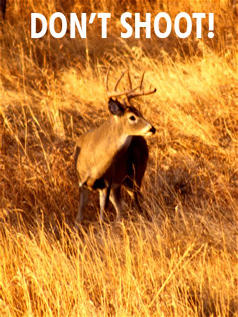 what should sportsman always consider when hunting from a boat shot selection and placement on whitetail and mule deer