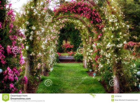 rose arch with bench rose arches stock photo image of park flowers bloom 15738162