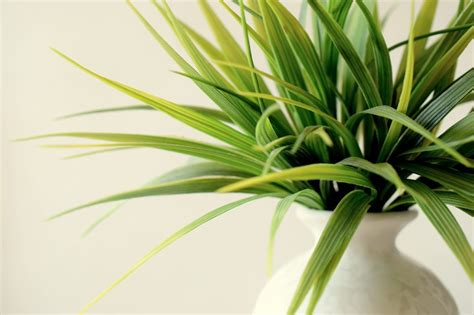 indoor plants india dispel indoor pollution with plants