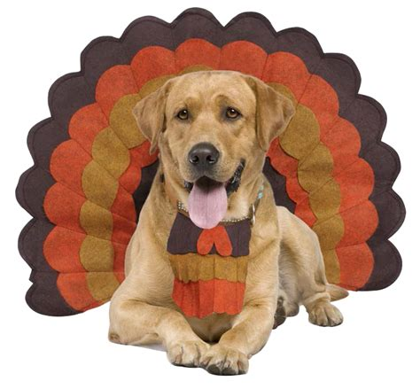 top faqs  care  comfort  thanksgiving paws