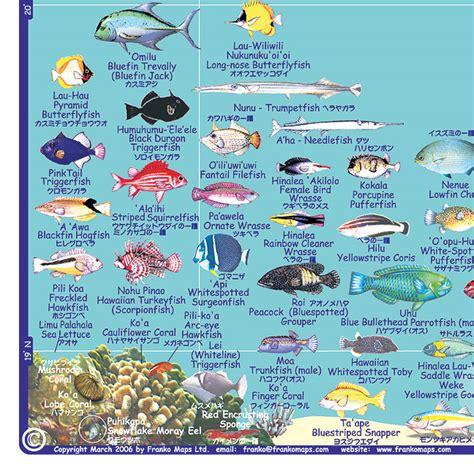 the ultimate guide to hawaiian reef fishes sea turtles big island tropical fish guide snorkel rentals in kona