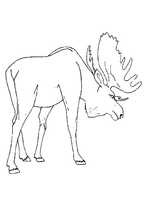 elk coloring page coloring home