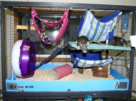 bedding for rats what is the best bedding for rats the best rat of 2017
