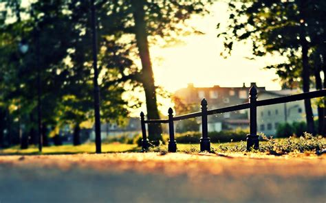 nature close  tree beautiful fence fencing sun day house