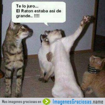 imagenes google chistosas frases chistosas de animales google search funny