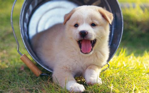 free for dogs free dogs photograph wide 1440x900