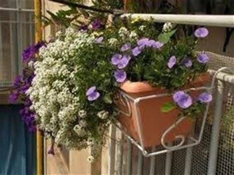 fiori invernali in vaso fioriere da balcone fioriere