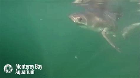 baby shark gif baby shark gifs find share on giphy