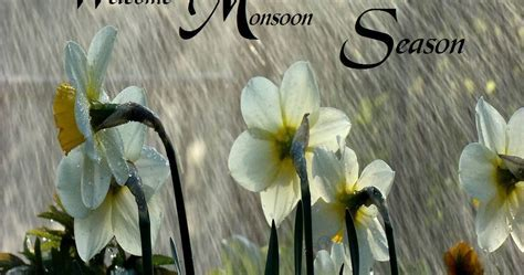 Welcome to Monsoon Season. Rainfall Photos   Festival Chaska
