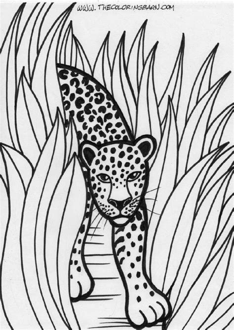 Easy Rainforest Coloring Pages by 53 Best Images About Coloring Pages On