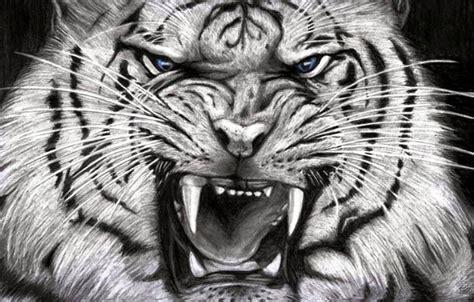 harimau putih prabu siliwangi 30 hasil foto macan yang imut dan gambar harimau putih