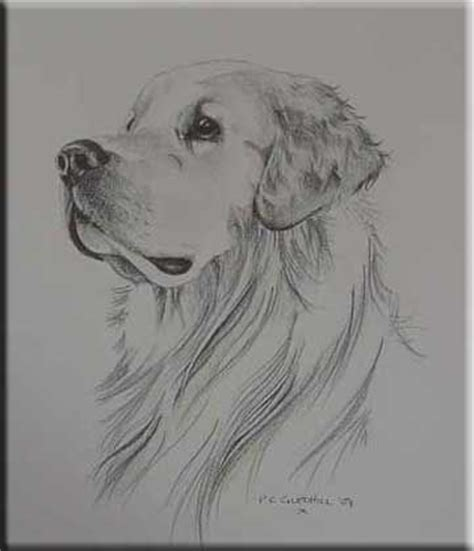 golden retriever drawing golden retriever pencil drawing inspiration dibujo golden