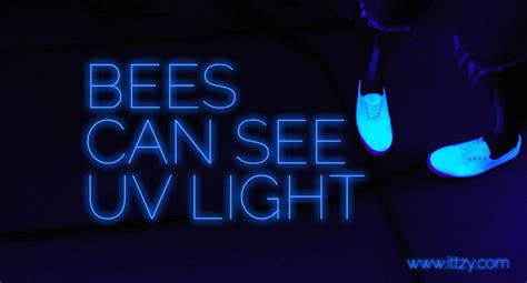 where can i see lights bees can see uv light