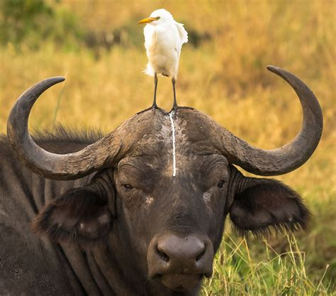 best wildlife photography finalists of the comedy wildlife photography awards 2016