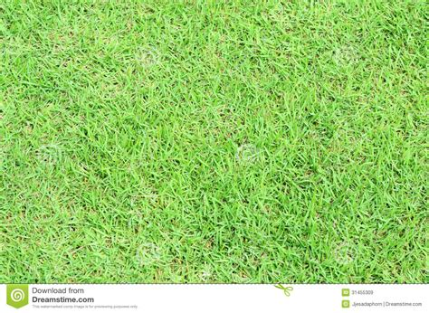pattern nature grass green grass background royalty free stock images image