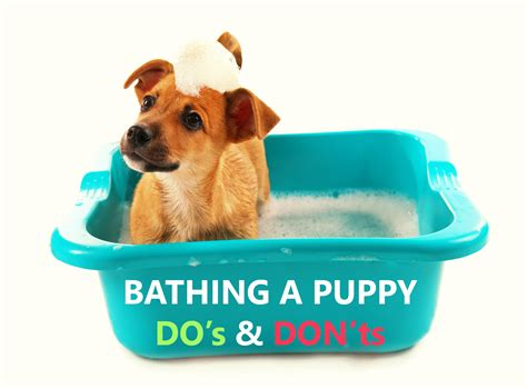 bathing puppies bathing a puppy do s and don ts mysweetpuppy net