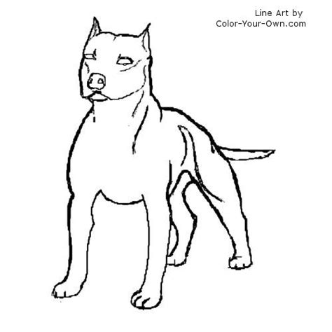 coloring pages of pitbull dogs free pitbull to draw coloring pages
