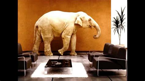 an elephant in the living room an elephant in the living room home factual