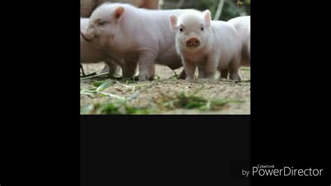 imagenes groseras de animales animales omnivoros youtube