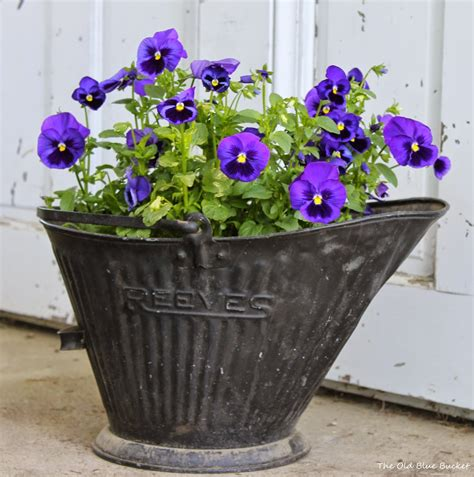 unique planters the old blue bucket thinking outside the pot unique